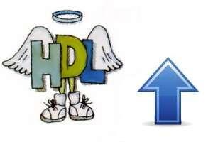 HDL е добър холестерол