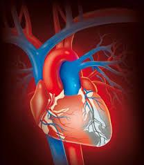 Хъркане един от симптомите на инфаркт